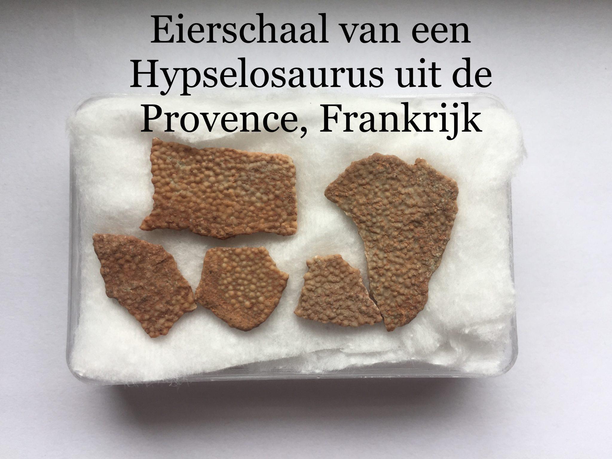 Hypselosaurus eierschaal fragement