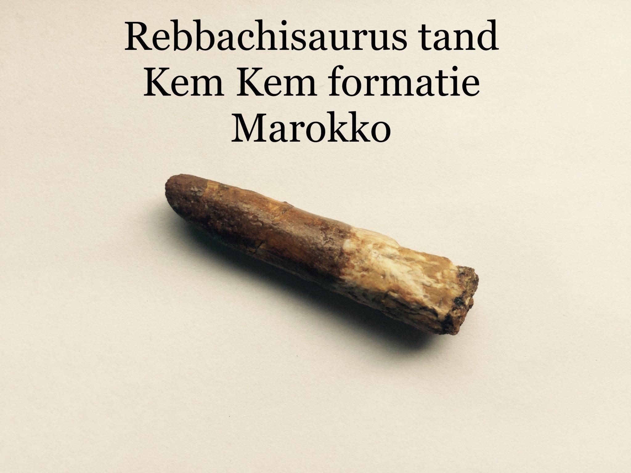 Rebbachisaurus fossiele tand