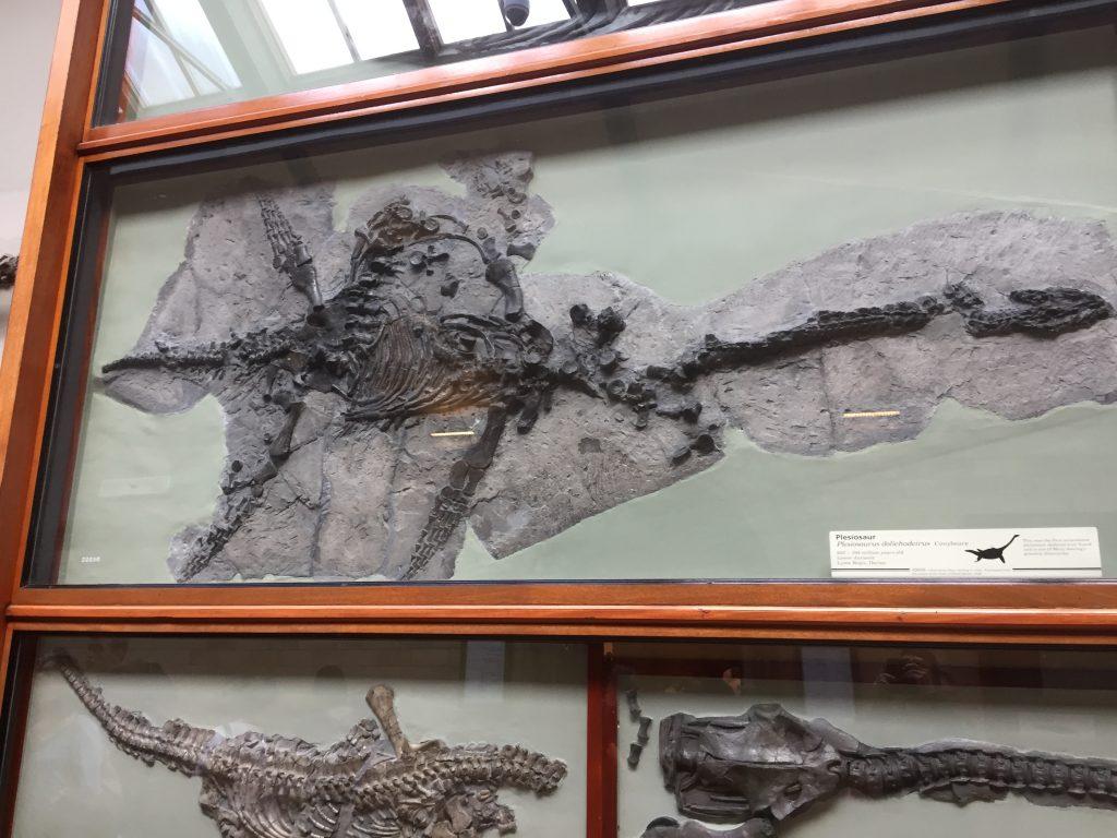 Plesiosaurus fossielen