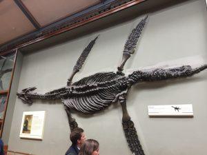 Pliosauridae fossiel