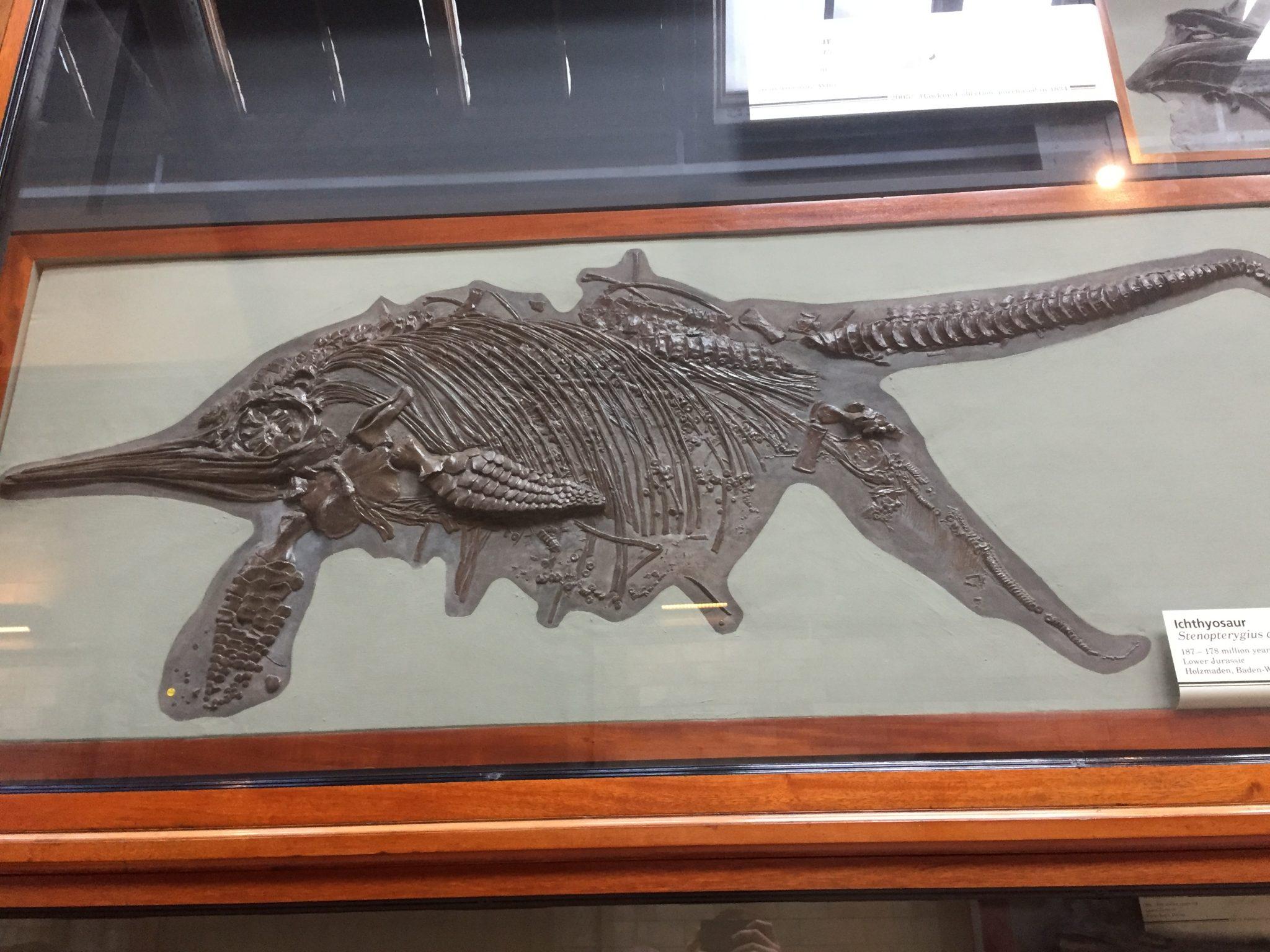 Hoe ontstaan fossielen?