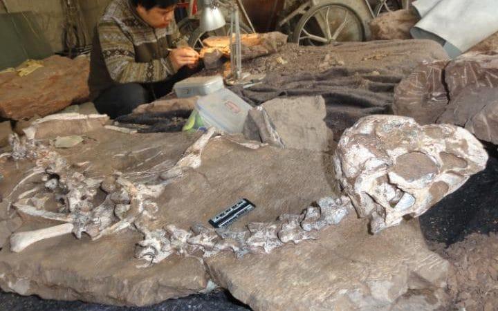 Oviraptorosauria fossiel