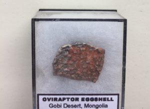Oviraptorosauria eierschaal fossiel