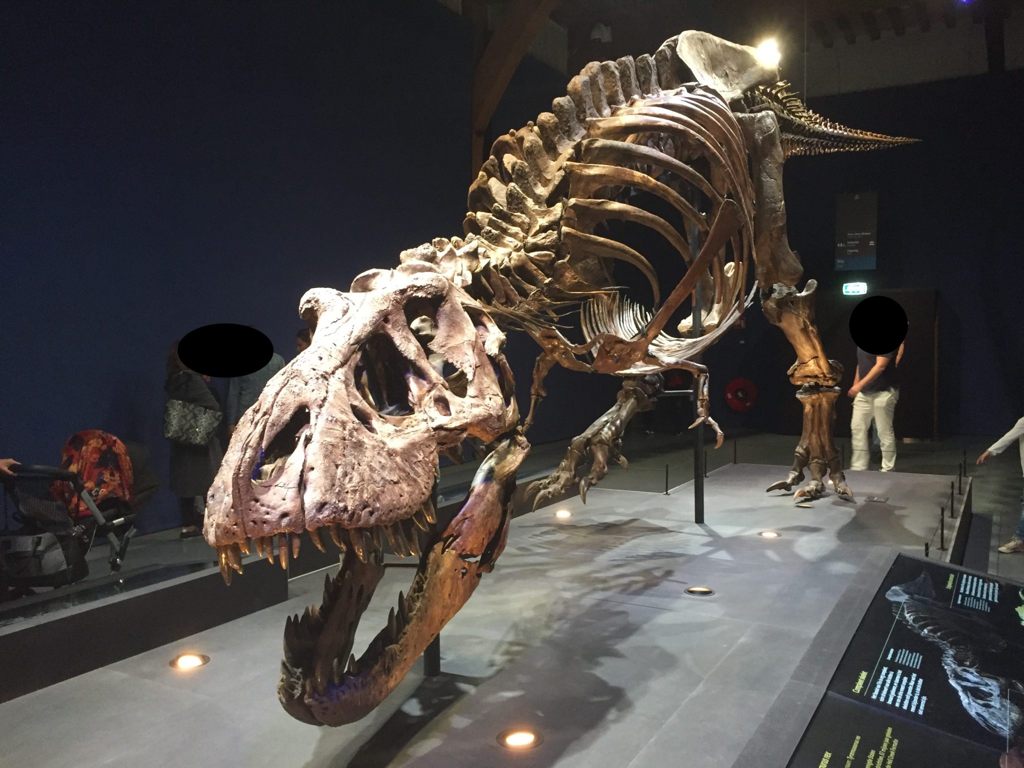 Jurassic Park Had Gelijk!!!