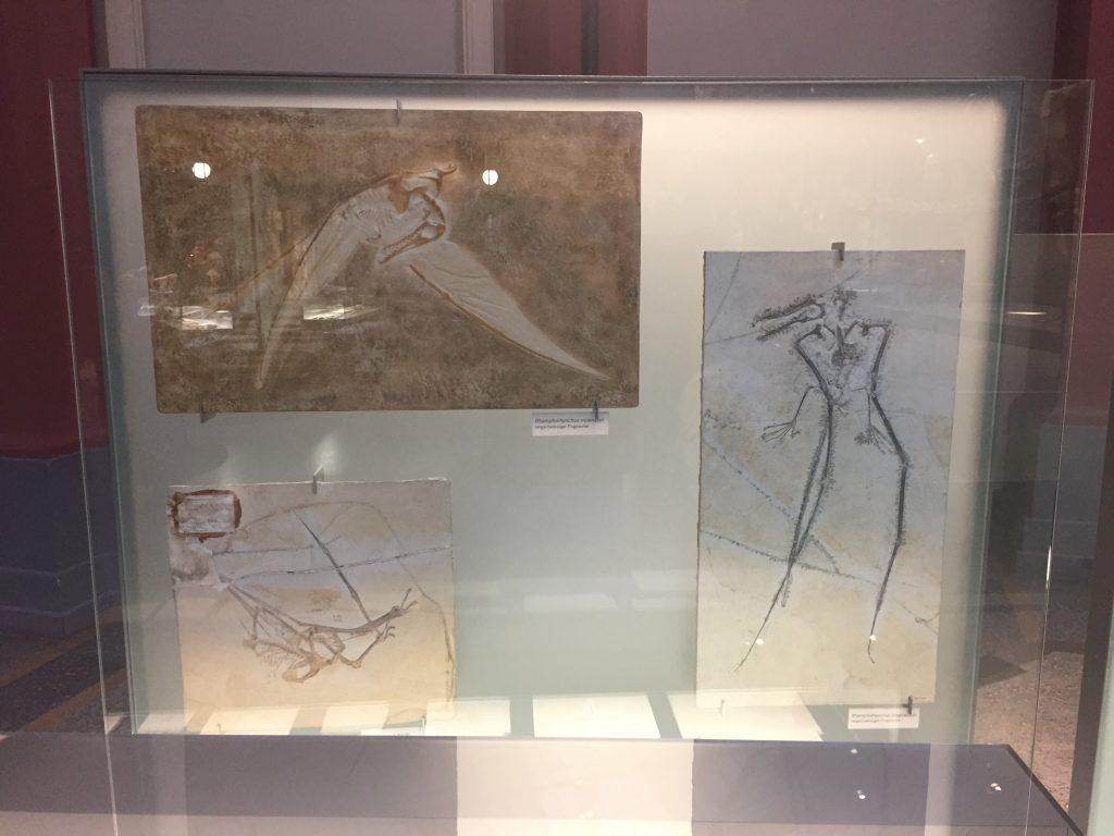 Pterosaurus fossielen Berlijn
