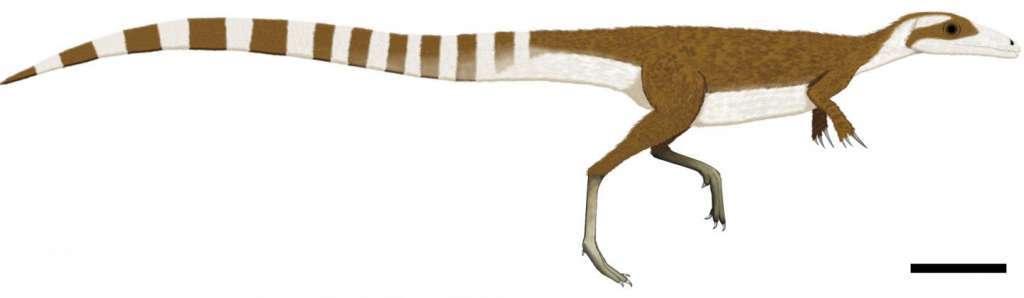 Sinosauropteryx door Fiann Smithwick