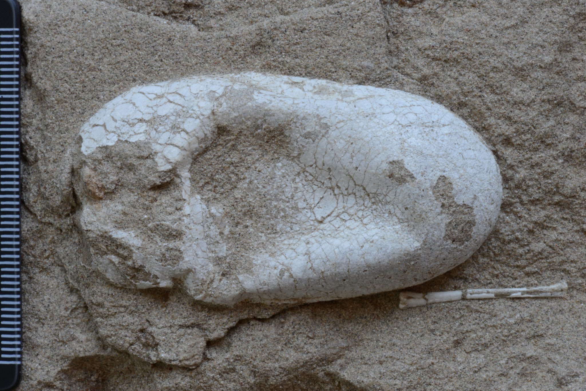 De Droom Van Elke Paleontoloog: Honderden Pterosauriër Eieren Gevonden In China