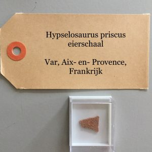 1x Hypselosaurus Eierschaal Fossiel