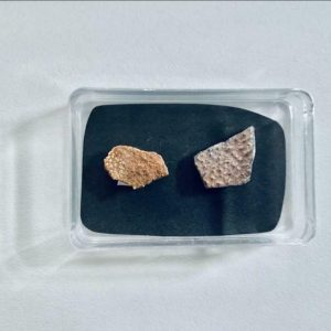 Fossiele dinosaurus eierschaal collectie