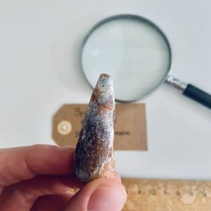 Bijzondere fossiele Spinosaurus tand